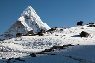 Silhouette of yak on the ridge and Ama Dablam