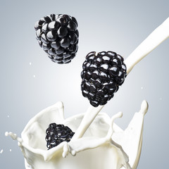Blackberry fall into milk splash
