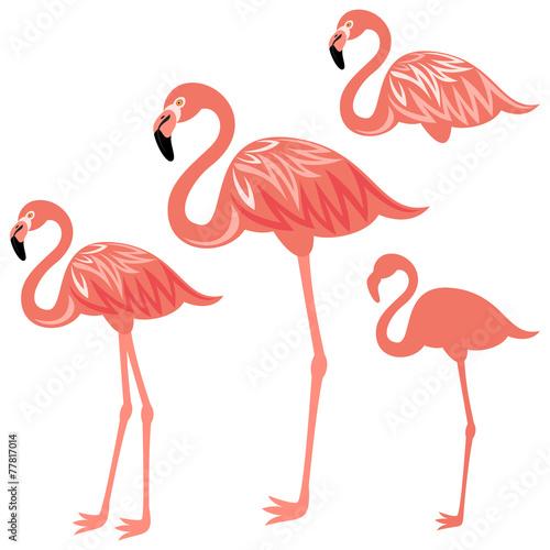 Flamingo © sandal1986