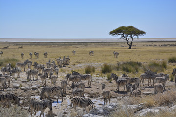 View over Etosha Pan, Namibia, Africa