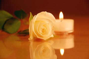 Teelicht mit Rose