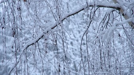 Snowfall and snowy tree