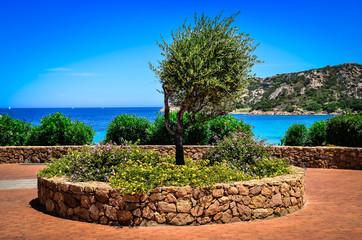 Olive tree in beautiful garden at ocean coast