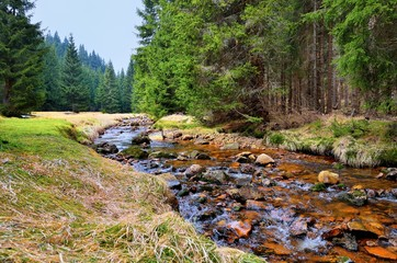 Erfrischender Gebirgsbach im Erzgebirge