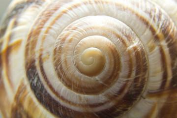 guscio chiocciola, lumaca, spirale