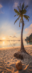 beautiful beach with coconut palm tree