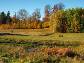 colorful, autumn landscape