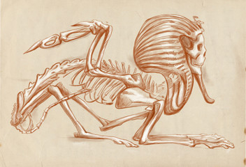 legendary animals and monsters: SPHINX