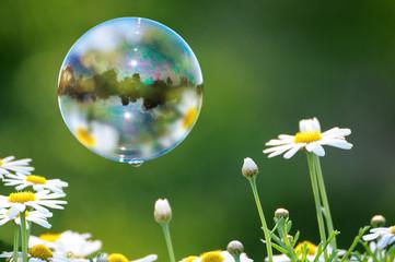 Seifenblasen und Margeriten