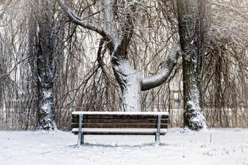 panchina solitaria coperta di neve