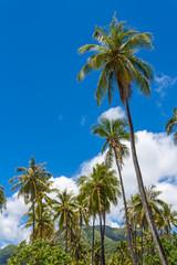 Cocotiers sur une plage polynésienne