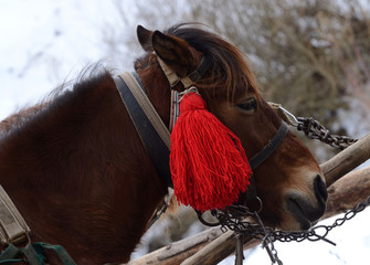 Portrait of horse with red pompon at Carpathian mountain village
