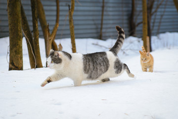 Cat and Kitten Running in the Snow in the Winter