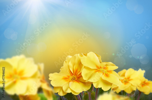 Yellow flowers on a nature background