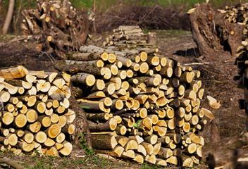 Bäume in einem Wald wurden umgeschnitten