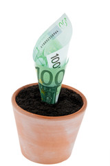 Euro-Geldschein in Blumentopf. Zinsen, Wachstum.