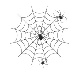 spider vector in white background, spider vector, cobweb vector