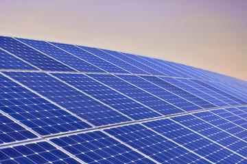 Solar Panel Field By Sunrise