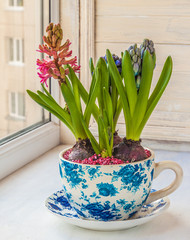 Hyacinth in a pot with a vintage patter