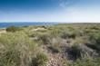 Alpha grass, Stipa tenacissima steppe