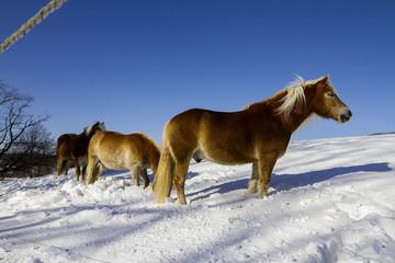 Winter Schnee Pferd