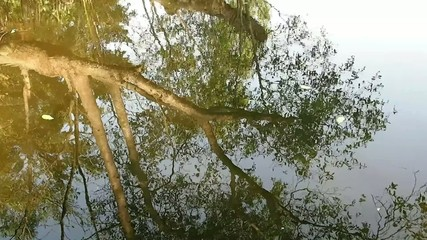 reflection of the tree in the water