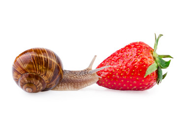 snail and strawberry