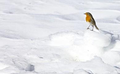pettirosso neve  solitudine