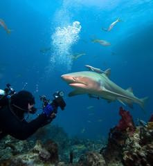 Lemon shark and underwater photographer