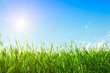 Fresh green grass on a background of the sky and sun