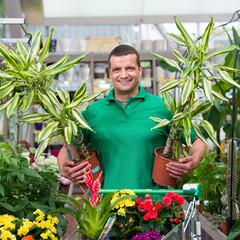 zimmerpflanzen im blumencenter kaufen