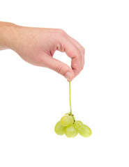 Hand holds one grapes.