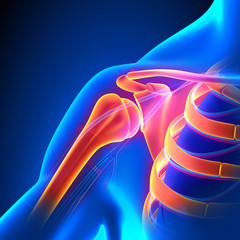 Shoulder Joint Anatomy Pain concept with Circulatory System