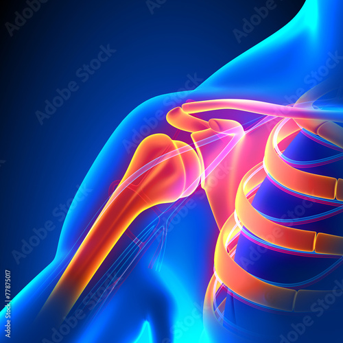 Barkowa koncepcja bólu z układem krążenia