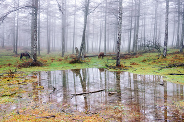 forest with puddle and horses