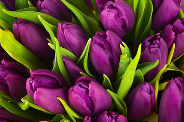 Nature bouquet from purple tulips for use as background.