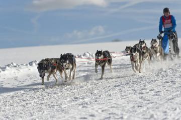 Hundeschlittenrennen Achtergespann