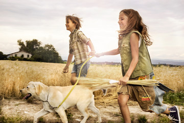 children running with the dog in wheat at sunset