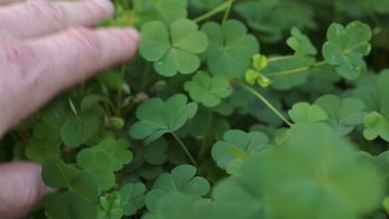 Man Looking Through Clover Plant