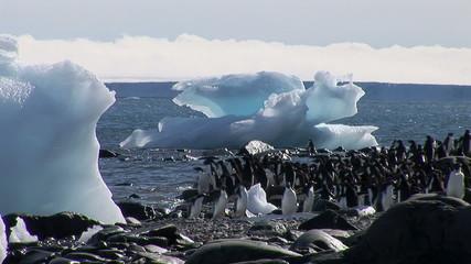 Adelie Penguins on beach in Hope Bay, Antarctica