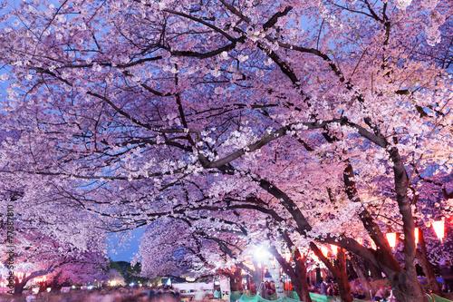 Papiers peints Jardin 上野公園の夜桜