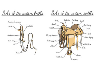 Parts of western saddle and bridle. Horse tack