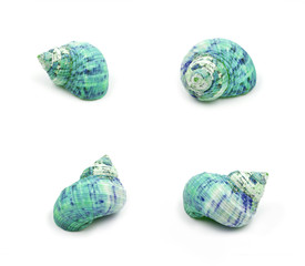 Blue Sea shells on white background