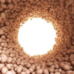 Circular tunnel of walnuts