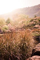 Flower grass and sunlight