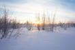 Landscape. winter forest