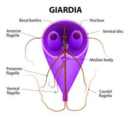 giardial