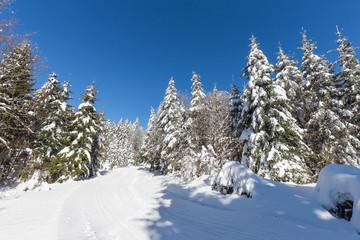 Forêt des vosges en hiver
