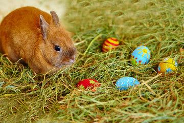 Easter bunny with painted eggs in hay