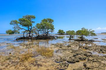 Boipeba - Plage de Castelhanos - Mangrove